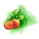 Watercolor Vector Pumpkin Stock Images