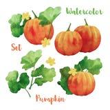 Watercolor Vector Pumpkin Set Stock Photos