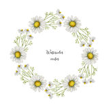 Watercolor vector round frame of chamomile. Healing Herbs for design Natural Cosmetics, aromatherapy, medicine, health products and homeopathy Stock Photo