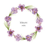 Watercolor vector round frame of saffron. Stock Photography
