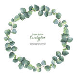 Watercolor vector round wreath with silver dollar eucalyptus. Healing Herbs for cards, wedding invitation, posters, save the date or greeting design. Summer vector illustration