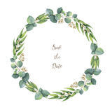 Watercolor vector round wreath with silver dollar eucalyptus. Healing Herbs for cards, wedding invitation, posters, save the date or greeting design. Summer Stock Photo