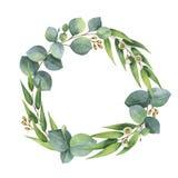 Watercolor vector round wreath with silver dollar eucalyptus. Stock Image