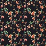 Watercolor vector sakura pattern Royalty Free Stock Image