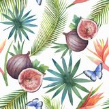Watercolor vector seamless pattern of figs and palm trees isolated on white background. Hand painted illustration for design kitchen, bio food, menu, healthy Stock Photos