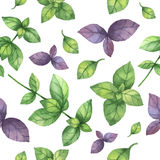 Watercolor vector seamless pattern hand drawn herb basil . Watercolor leaves and branches of basil on a white background. Herbs for packaging design, cards Royalty Free Stock Photography