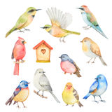 Watercolor vector set of birds. Stock Image