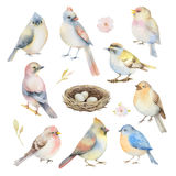 Watercolor vector set of birds. Royalty Free Stock Photo