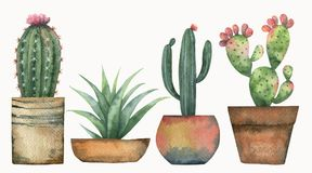 Watercolor vector set of cacti and succulent plants isolated on white background. Flower illustration for your projects, greeting cards and invitations vector illustration