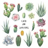Watercolor vector set of cacti and succulent plants isolated on white background. Stock Photo