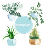 Watercolor vector set of houseplants.Illustration Stock Photo
