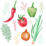 Watercolor vector vegetables set tomato, pepper and onion. Stock Photography