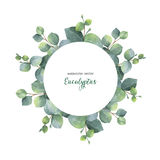 Watercolor vector wreath with silver dollar eucalyptus leaves and branches. Watercolor vector hand painted wreath with silver dollar eucalyptus leaves and Royalty Free Stock Images