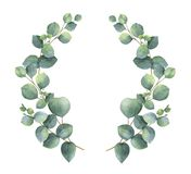 Watercolor vector wreath with silver dollar eucalyptus leaves and branches. vector illustration