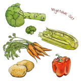 Watercolor vegetable sketches set with ink contour Stock Photos