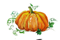 Watercolor pumkin stock images
