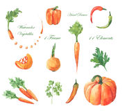 Watercolor vegetables Royalty Free Stock Image