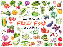 Watercolor Vegetables Isolated On White Stock Images