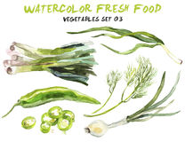 Watercolor vegetables isolated on white Stock Image
