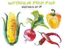 Watercolor vegetables isolated on white Royalty Free Stock Photos
