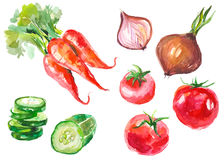Watercolor vegetables isolated on white Stock Photo