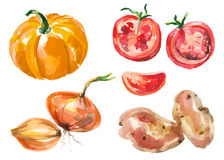 Watercolor vegetables isolated on white Royalty Free Stock Photography