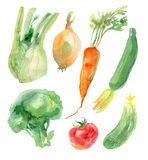 Watercolor vegetables set Stock Photos