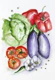 Watercolor vegetables set Stock Photos