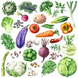 Watercolor Vegetables Set. Hand drawn raw food illustration. Set of organic products. Watercolor various vegetables, greens and beans isolated on white stock illustration