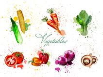 Watercolor vegetables set Vector. Delicious tomatoes, mushrooms and green leaves. Watercolor vegetables set Vector. Delicious tomatoes, mushrooms and spinach royalty free illustration
