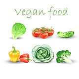 Watercolor vegetables set Stock Image
