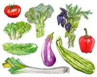 Watercolor vegetables set on white background. Hand drawn vegetables set on white background stock illustration