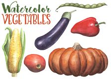 Watercolor vegetables on white background. Handdrawn vegetables isolated. Hand-painted pumpkin, eggplant, tomato royalty free illustration