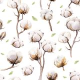 Watercolor vintage background with twigs and cotton flowers boho. Decoration. Softness Botanical watercolour seamless pattern print. Bohemian floral branch Royalty Free Stock Photo