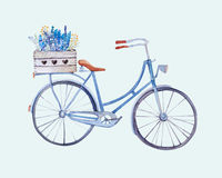 Watercolor vintage  bicycle with box of flowers Royalty Free Stock Photo