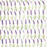 Watercolor vintage hand drawn lavender flowers seamless pattern. Illustration for your design Stock Images