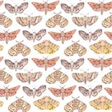 Watercolor vintage moth and butterfly seamless pattern Royalty Free Stock Photo