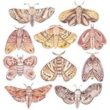 Watercolor vintage moth and butterfly set. Watercolor hand painted  vintage moth and butterfly set Royalty Free Stock Photos