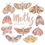 Watercolor vintage moth and butterfly set. Watercolor hand painted  vintage moth and butterfly set Royalty Free Stock Photography