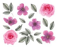 Watercolor vintage rose flowers and leaves. vector illustration