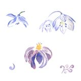 Watercolor violet flowers Stock Photography