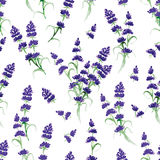 Watercolor violet lavender seamless vector print Stock Image