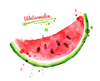Watercolor watermelon. Stock Photography