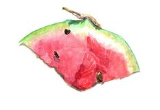 Watercolor watermelon with tail on white background Stock Photos
