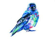 Watercolor western jackdaw Royalty Free Stock Photos
