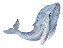 Watercolor Whale Painting Royalty Free Stock Photography