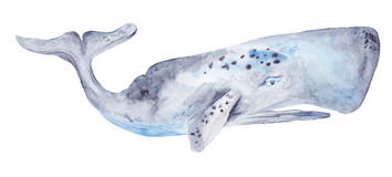 Watercolor Whale Painting Stock Photo