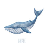 Watercolor whale. Vector illustration with cute watercolor blue whale Stock Photos
