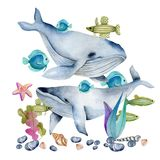Watercolor whales among the oceanic fishes illustration. Hand painted on a white background vector illustration