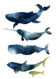 Watercolor whales set. Hand drawn sea animals silhouettes with sky texture. Prints with blue whale, harwhale, cachalot, orca isola. Ted on white background. For Royalty Free Stock Photos